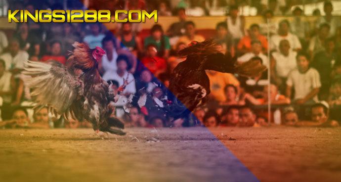 Adu Ayam Jago S128