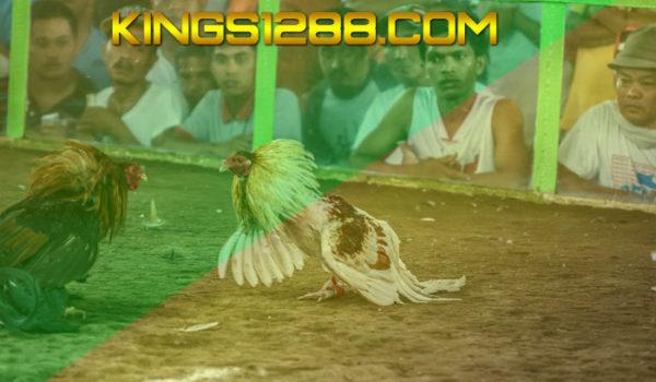 Agen Sabung Ayam SV388