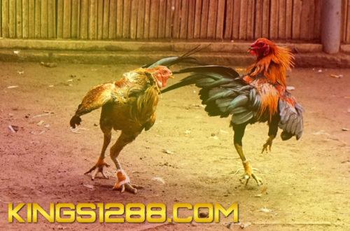 Situs Adu Jago Online