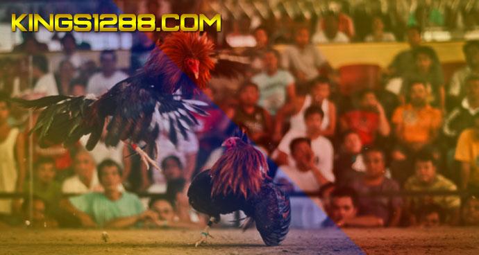 Situs Sabung Ayam