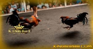 S128 Live Sabung Ayam
