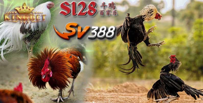 S128 Sabung Ayam