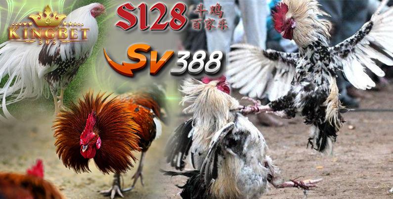 S1288 Sabung Ayam