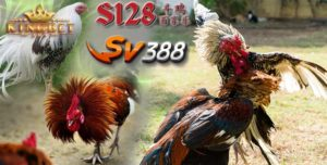 Judi S1288