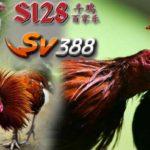 Situs S128 Ayam