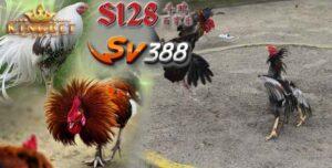 S1288 Link Download